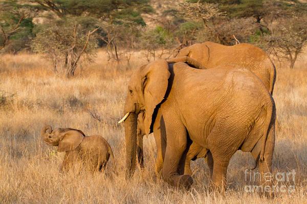 Photograph - Baby Elephant by Chris Scroggins