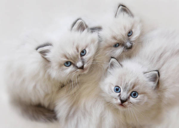 Kitties Photograph - Baby Faces by Lori Deiter