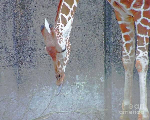 Digital Art - Baby Giraffe by Lizi Beard-Ward
