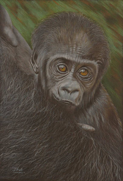 Baby Gorilla Painting - Baby Gorilla - Little Djemba by Jill Parry