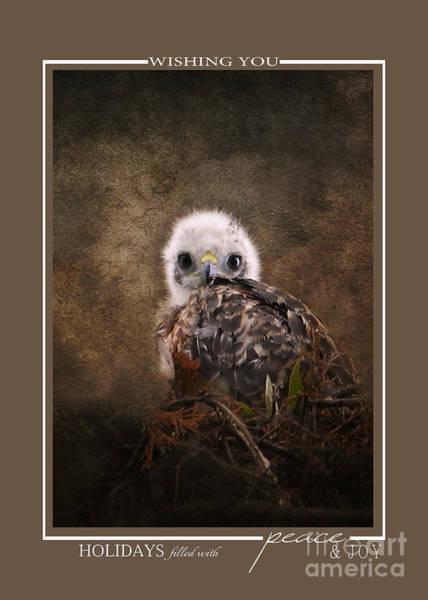 Photograph - Baby Hawk Wildlife Christmas Cards by Jai Johnson