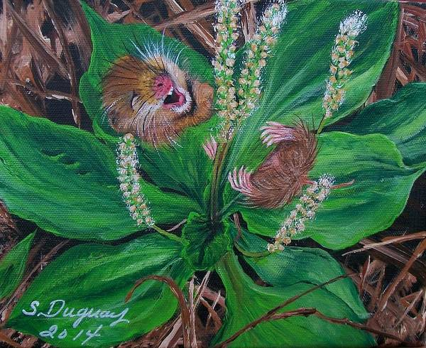 Painting - Baby   Molly  by Sharon Duguay