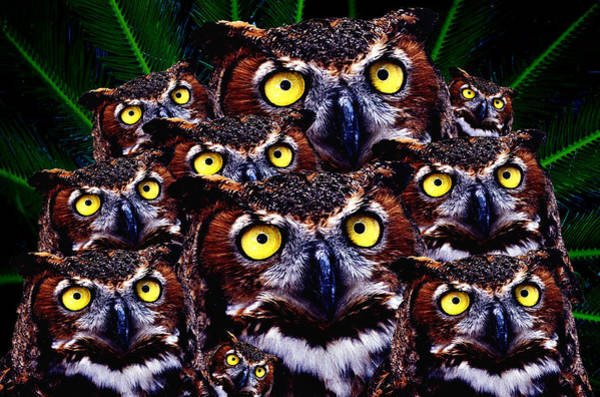 Wall Art - Digital Art - Baby Owl In Crowd  by Fred Leavitt