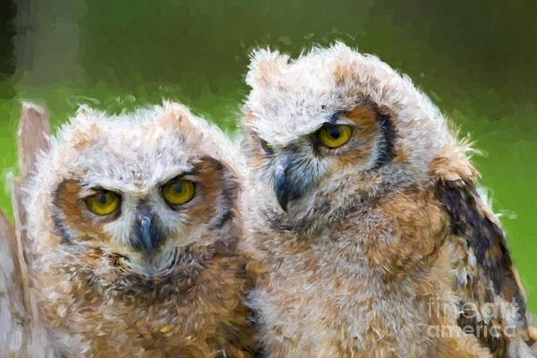 Photograph - Baby Owls by Les Palenik