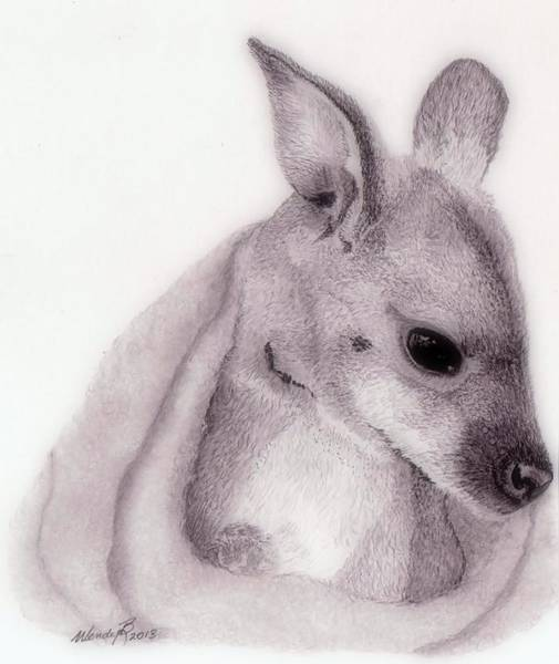 Kangaroo Drawing - Baby Roo by Wendy Brunell