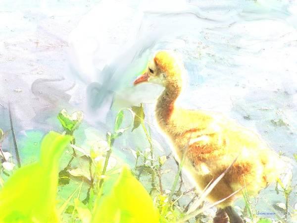 River Scene Mixed Media - Baby Sandhill Crane by Lenore Senior
