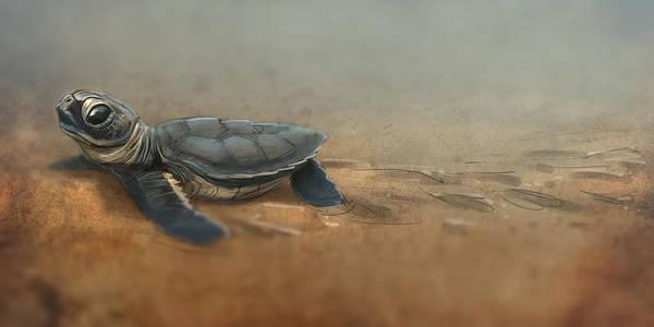 Seas Digital Art - Baby Turtle by Aaron Blaise