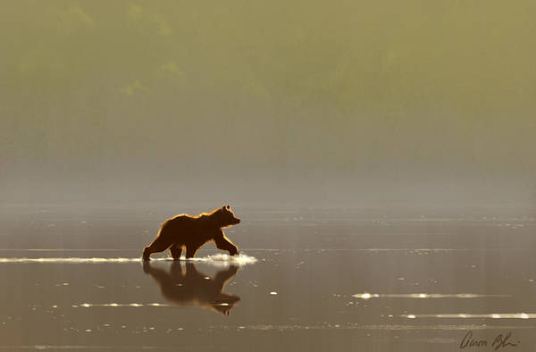 Wall Art - Digital Art - Back Lit Grizzly by Aaron Blaise