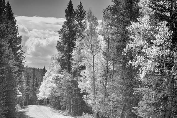 Photograph - Back Road To Central City In Black And White by James BO Insogna
