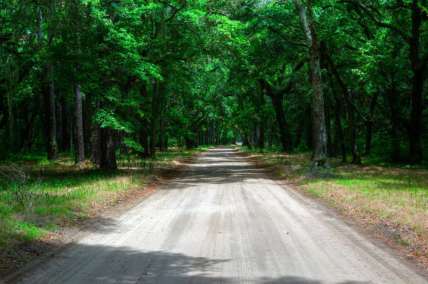 Photograph - Back Roads Of South Carolina by Michael Colgate