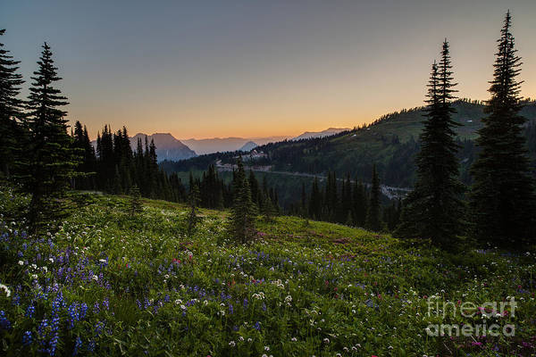 Mount Rainier Photograph - Back To Paradise by Mike Reid