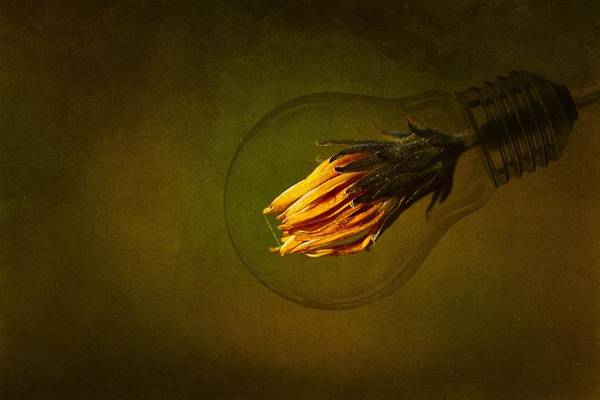 Lamp Wall Art - Photograph - Back To The Green Future by Dusan Macko
