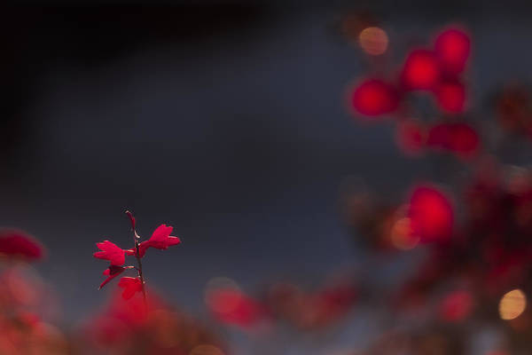Shrubs Photograph - Backlight by Chad Dutson