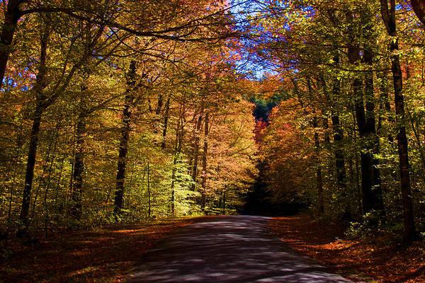 Photograph - Backlit Canopy by Larry Landolfi