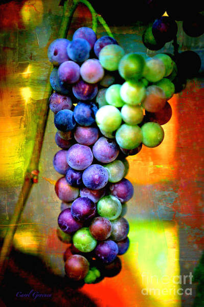 Photograph - Backlit Grape Cluster With Textures by Carol Groenen