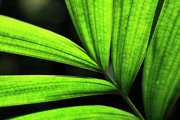 Far North Queensland Wall Art - Photograph - Backlit Rainforest Plants Create by Paul Dymond