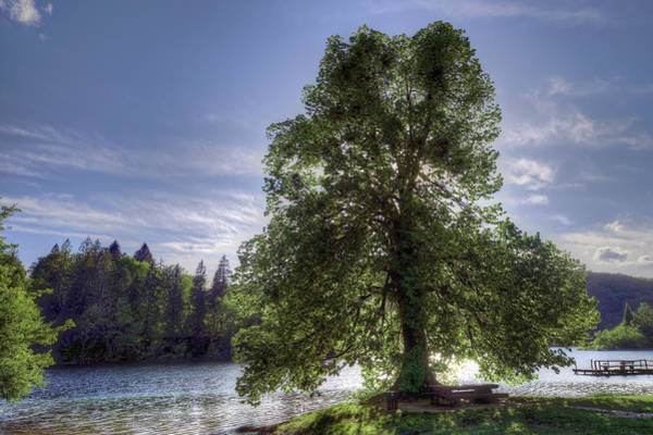 Photograph - Backlit Tree by Ivan Slosar