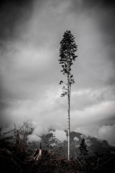 Photograph - Lone Tree Landscape  by Roxy Hurtubise