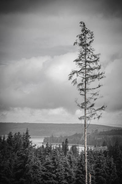 Photograph - Tall Tree View by Roxy Hurtubise