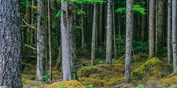 Photograph - Inside View Backroad Forest by Roxy Hurtubise