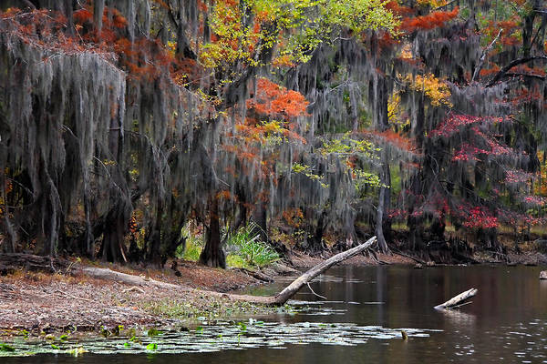 Wall Art - Photograph - Backwater Autumn 2 by Lana Trussell