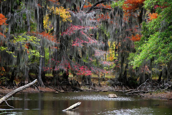 Bald Cypress Wall Art - Photograph - Backwater Autumn by Lana Trussell