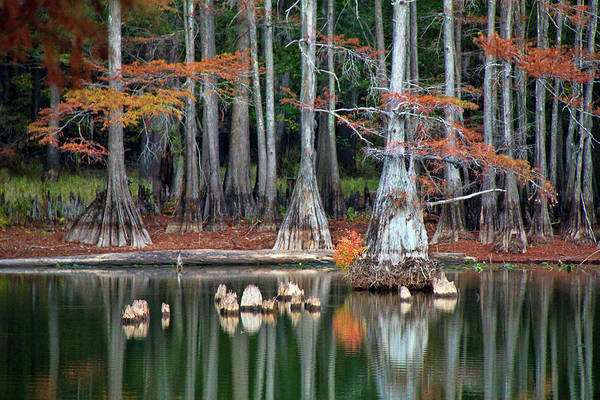 Bald Cypress Wall Art - Photograph - Backwaters by Lana Trussell