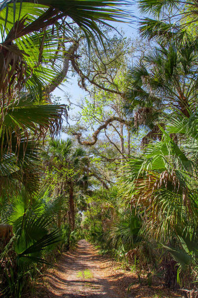 Palmetto Photograph - Backwoods Road by W Chris Fooshee