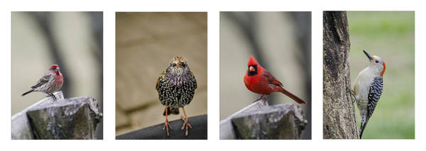 Photograph - Backyard Bird Set by Heather Applegate