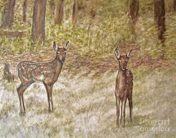 White Tailed Deer Drawing - Backyard Fawns by Meagan  Visser