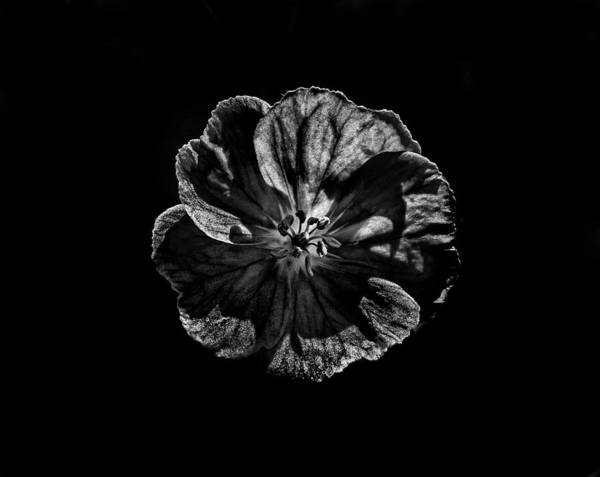 Photograph - Backyard Flowers In Black And White 6 by Brian Carson