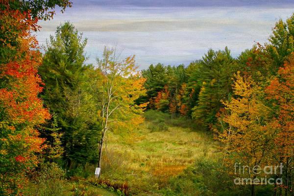 Photograph - Backyard In Vermont by Deborah Benoit