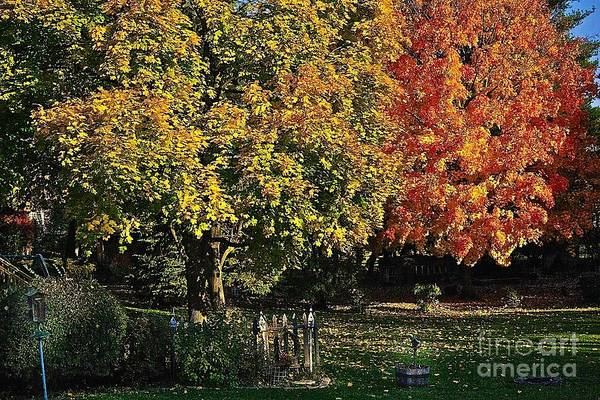 Photograph - Backyard Morning In The Fall by Frank J Casella