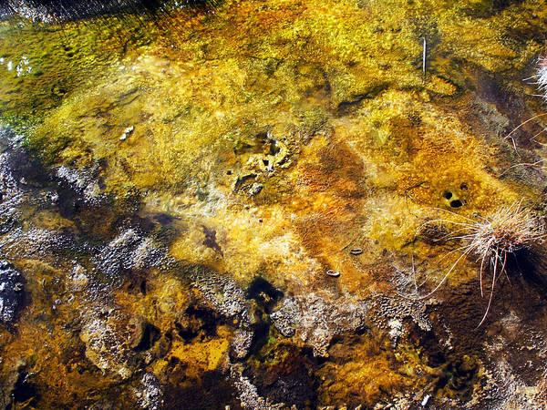 Photograph - Bacteria Mat 2 by Tarey Potter