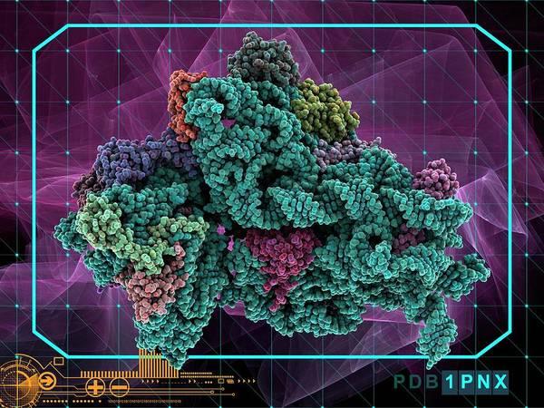 Escherichia Coli Photograph - Bacterial Ribosome by Laguna Design/science Photo Library