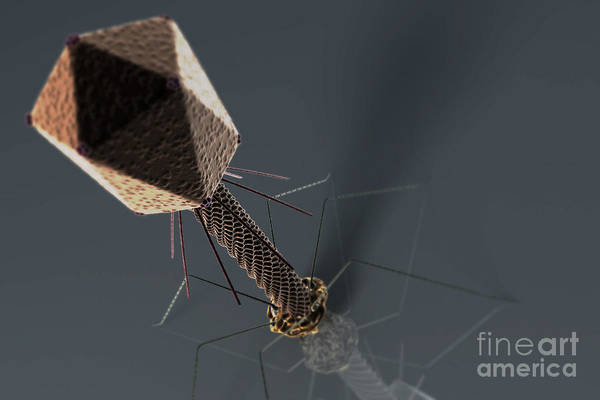 Wall Art - Photograph - Bacteriophage by Science Picture Co