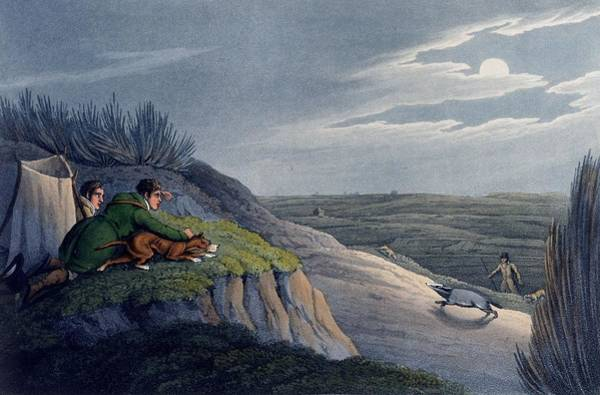 Hound Drawing - Badger Catching, 1820 by Henry Thomas Alken