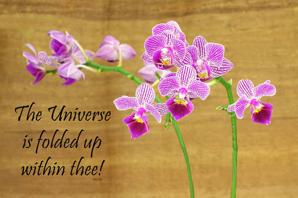 Photograph - Bahai Purple Orchid Quote-1 by Rudy Umans