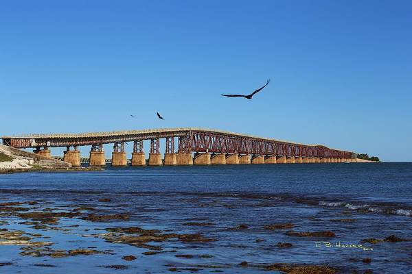 Photograph - Bahia Honda Bridge With Osprey by R B Harper