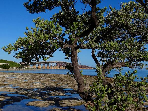 Photograph - Bahia Honda Rail Bridge And Tree by Keith Stokes