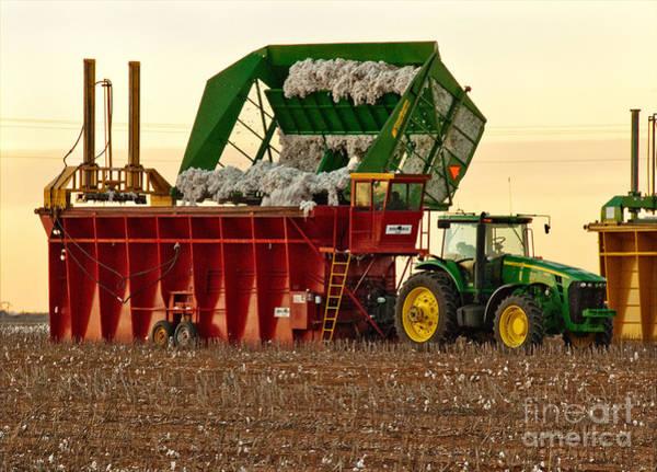 Photograph - Bailing Cotton by Mae Wertz