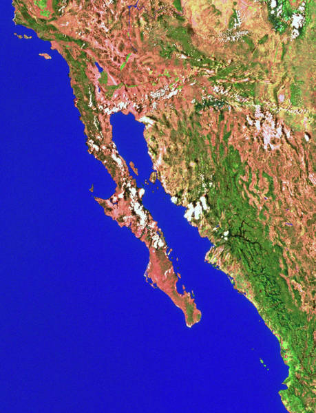 Baja California Peninsula Wall Art - Photograph - Baja California by Worldsat International Inc./science Photo Library