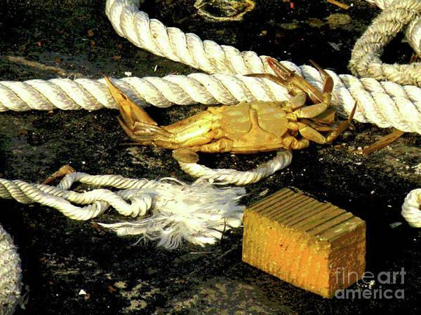 Angling Art Photograph - Baked Crab by Joe Pratt