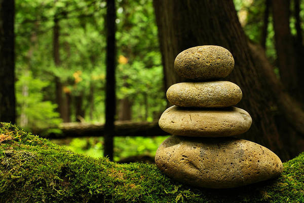 Environmental Conservation Photograph - Balance by Ianchrisgraham