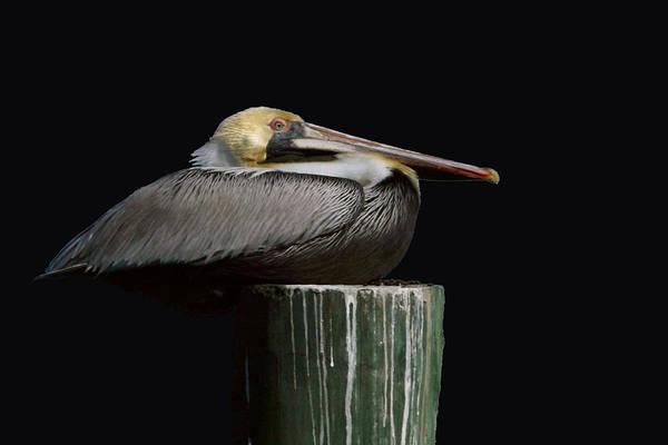 Photograph - Balance by John  Nickerson