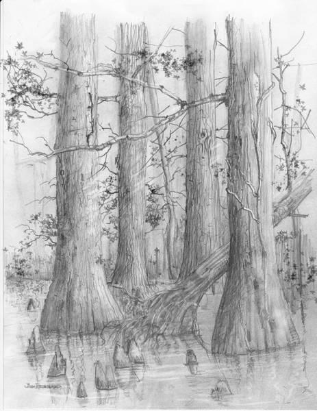 Wall Art - Drawing - Bald Cypress by Jim Hubbard