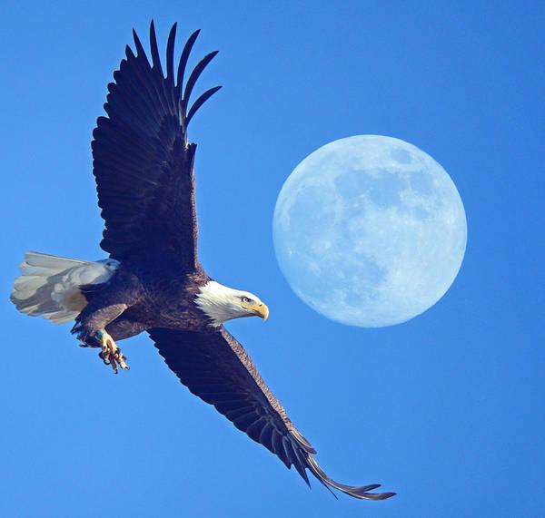 Photograph - Bald Eagle And Full Moon by Raymond Salani III
