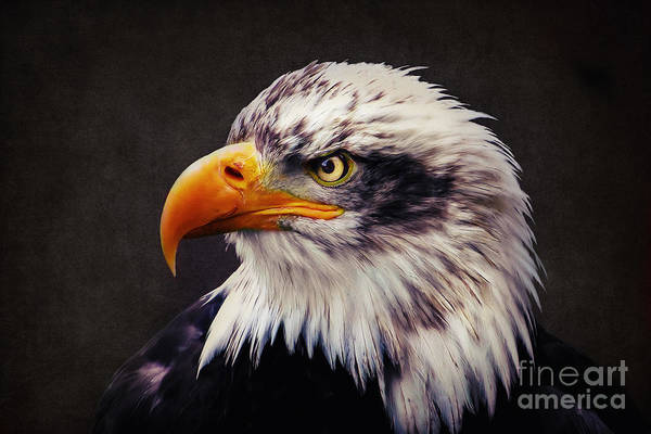 Digital Art - Bald Eagle by Angela Doelling AD DESIGN Photo and PhotoArt