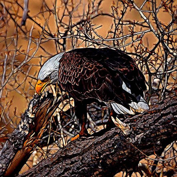 Colorado Wildlife Digital Art - Bald Eagle Colorado Digital Art by Ernie Echols
