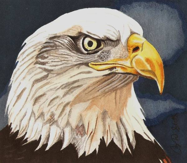 Bald Eagles Drawing - Bald Eagle by Cory Still